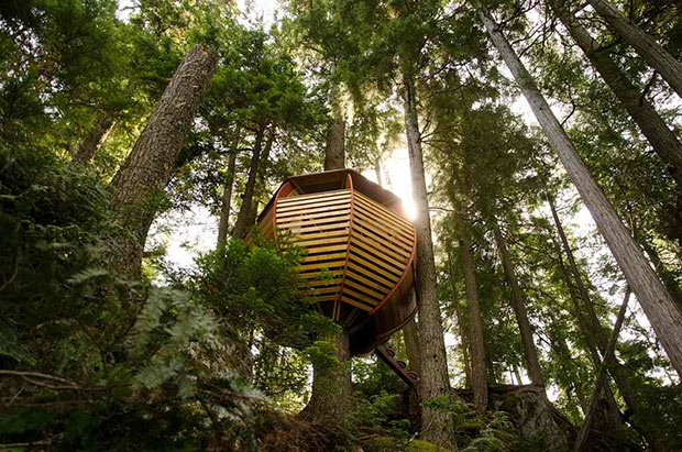 Secret Tree House