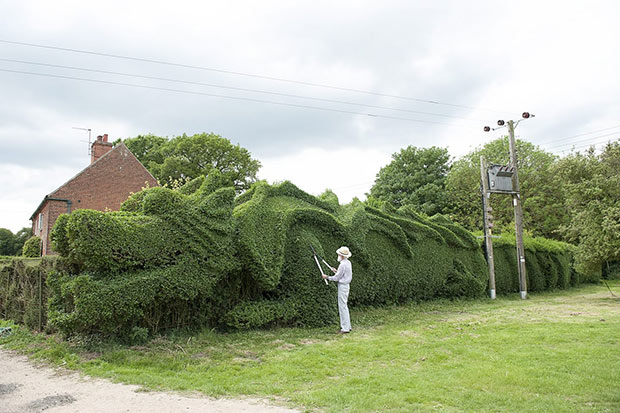 Dragon Hedge
