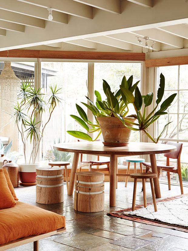 Oversized Plant
