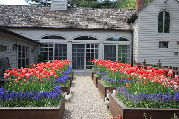 Planting Bed Tulips