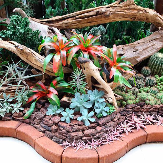 Succulents Flower Bed