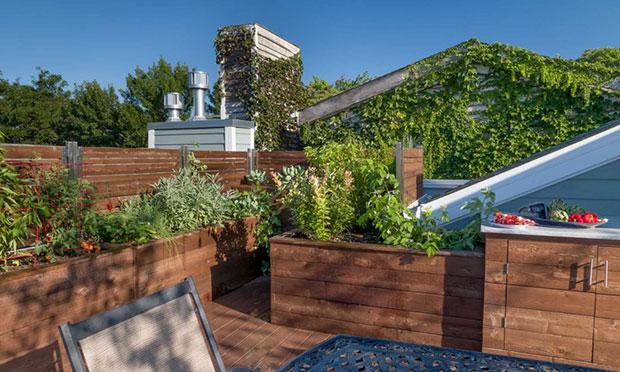 A Fruitful Roof Deck